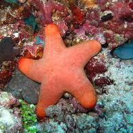 koraal19